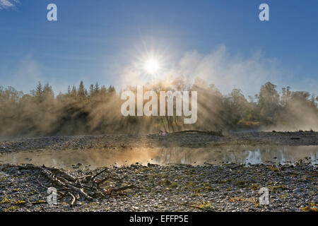 Germany, Upper Bavaria, Geretsried, Isarauen, Pupplinger Au in the morning - Stock Photo