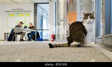 Hildesheim, Germany. 02nd Feb, 2015. Cat 'Fraeulein Sinner' sits in the University of Hildesheim in Hildesheim, - Stock Photo