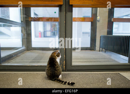 Hildesheim, Germany. 02nd Feb, 2015. Cat 'Fraeulein Sinner' sits in the University of Hildesheim and waits for someone - Stock Photo