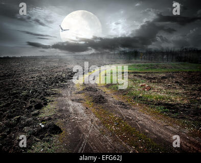 Country road under moon and flying bird. Elements of this image furnished by NASA - Stock Photo