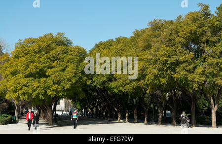 Avenue of trees in the national gardens of Greece in Athens. - Stock Photo
