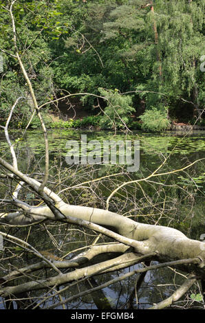 Keston ponds bromley kent uk stock photo royalty free for Stocked fishing ponds near me