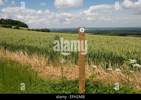 Footpath sign and public footpath cut through the middle of a wheat crop in green unripe ear.  Fine summer day in - Stock Photo