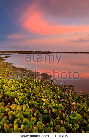 Colorful evening skies at Refugio de vida Silvestre Cienaga las Macanas, Herrera province, Republic of Panama. - Stock Photo