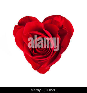 Red rose blossom in heart shape, isolated on white background - Stock Photo