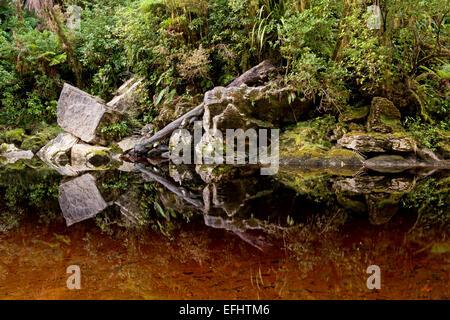 Tannin stained waters in the rain forest in the Oparara Basin, Karamea, Kahurangi Nationalpark, South Island, New - Stock Photo