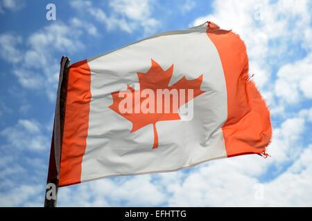 Canadian flag, Canada - Stock Photo