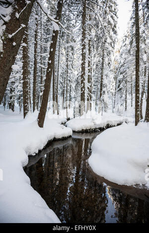 Snow covered trees and small stream, Bernau, Black Forest, Baden-Wuerttemberg, Germany - Stock Photo