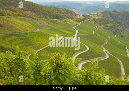 View towards vineyards near Piesport, Mosel, Rhineland-Palatinate, Germany, Europe - Stock Photo