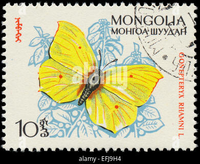 MONGOLIA - CIRCA 1963: A stamp printed in Mongolia shows butterfly with the inscription 'Gonepteryx Rhamni' from - Stock Photo