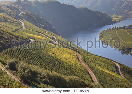 View over the vineyards of Piesport, Loreley rocks in the background near the river Moselle, Piesport, Rheinland - Stock Photo