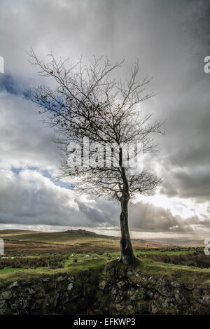 Tree on a stone wall overlooking Dartmoor and a cloudy sky - Stock Photo