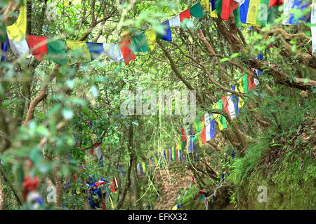 Buddhist prayer flags waving in the wind in the forest on the rear side of the Khenchen Thrangu Rinpoche founded - Stock Photo