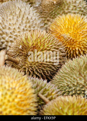 The durian, fruit of several tree species belonging to the genus Durio and the Malvaceae family, Myanmar - Stock Photo