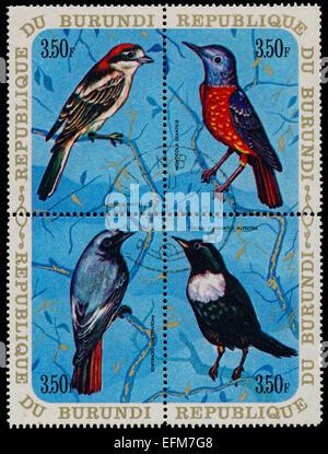 BURUNDI - CIRCA 1970: A set of four stamps printed in Burundi, shows a birds Woodchat Shrike, Common Rock Thrush, - Stock Photo