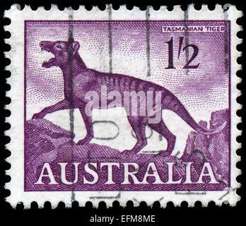 AUSTRALIA-CIRCA 1961: A stamp printed in Australia, shows a Tasmanian tiger (Thylacinus cynocephalus), circa 1961 - Stock Photo