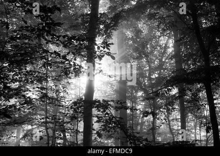 Light passing through trees - Stock Photo