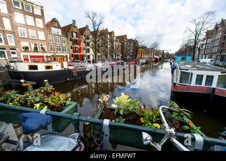 Winter light on a canal in Amsterdam with plants and a bicycle in the foreground - Stock Photo