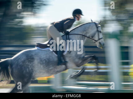 Show jumping competition - Stock Photo