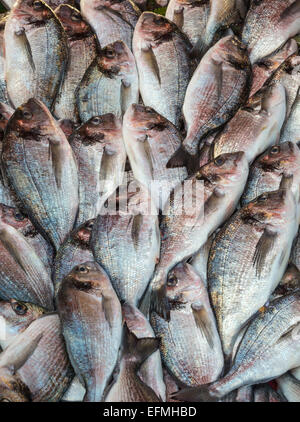 Mediterranean Sea Bream at the fish market on Karakoy waterfront, Beyoglu,  Istanbul, Turkey. - Stock Photo