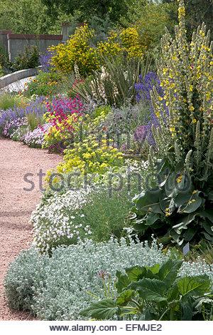 Xeriscape Garden - Stock Photo