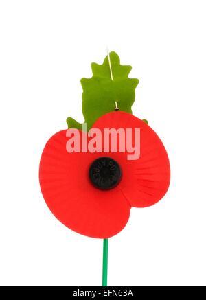 Royal British Legion Poppy Appeal Remembrance Day Poppy - Stock Photo