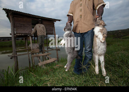 Rwandan farmers show off domestic rabbits outside their hutches which sit over a fishpond, Rwanda - Stock Photo