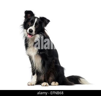 Border Collie (2 years old) against white background - Stock Photo