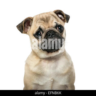 Close-up of a pug against white background - Stock Photo