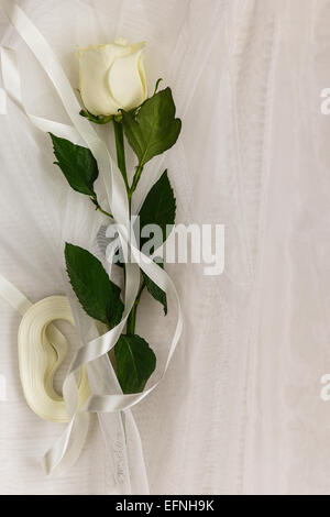 Beige rose and ribbon on a white tulle - Stock Photo