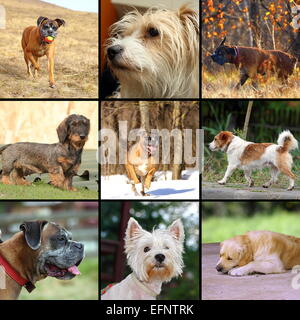 collage of images with happy dogs in different situations - Stock Photo