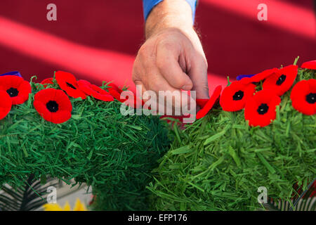 Remembrance Day Poppies, Hand Placing Poppy on Wreath - Stock Photo