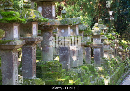 Stone lanterns at dusk at Kasuga Taisha Shrine, UNESCO World Heritage Site, Nara, Kansai, Japan, Asia - Stock Photo