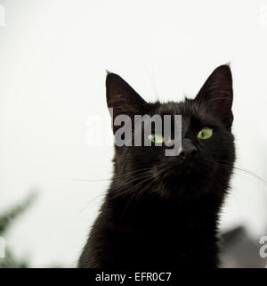 Head and shoulders of attractive black female farm cat with green eyes with sky behind - Stock Photo