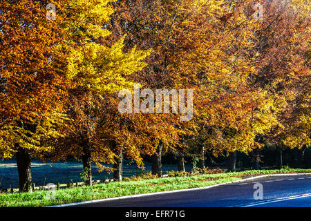 Autumn trees along a road near Beckhampton in Wiltshire. - Stock Photo