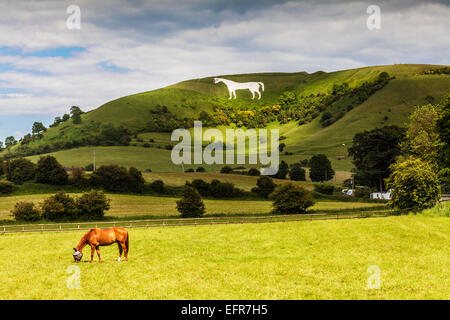 The White Horse below Bratton Camp, and a grazing horse wearing a fly mask near Westbury in Wiltshire. - Stock Photo