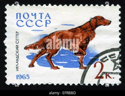 USSR,post mark,stamp,animals,animals illustrations,dog,,fauna,Irish Setter - Stock Photo
