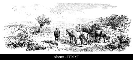 New Forest, UK, photographed from a book 'English Pictures Drawn with Pen and Pencil' published in London ca. 1870. - Stock Photo