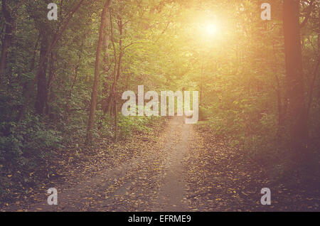Path in the sunny forest at autumn - Stock Photo