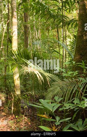 Primary rainforest Langkawi Malaysia,asia - Stock Photo