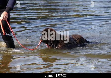 Dog Training Blackwater
