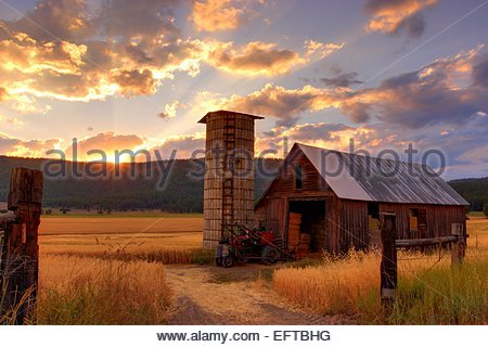 Wooden barn in field at sunset - Stock Photo