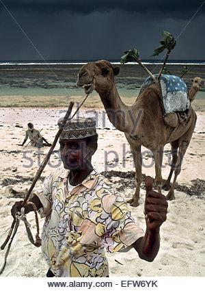 Kenya - Republic of Kenya Africa 2000 Mombasa Beach People Person Camel Camels Elderly Senior Old Head And Shoulders - Stock Photo