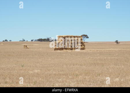 Haystack in the middle of a wheat field. - Stock Photo