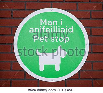 Welsh Pet Shop Sign Words Language Newport area Wales UK Iphone Mans Hand United Kingdom Great Britain British UK - Stock Photo