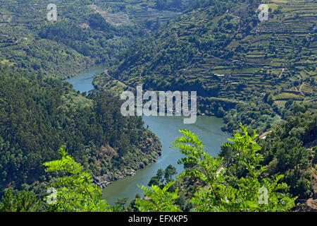 Terraces wine fields on the steep banks of the Douro river, Portugal - Stock Photo