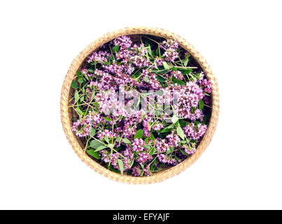 oregano wild marjoram (Origanum vulgare) medical flowers in basket isolated on white - Stock Photo