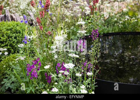 Black water bassin, box balls and naturalistic planting featuring verbascum and orlaya - Stock Photo