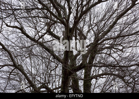 Bare branches on winter tree against the sky - Stock Photo