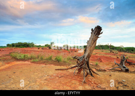 Dry trees and eroded soil in Sarigua national park (desert), Herrera province, Republic of Panama. - Stock Photo